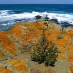 Sinemorets, Listy Beach