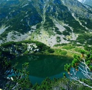 "National park ""Pirin"""