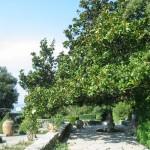 The town of Balchik, Botanic Garden