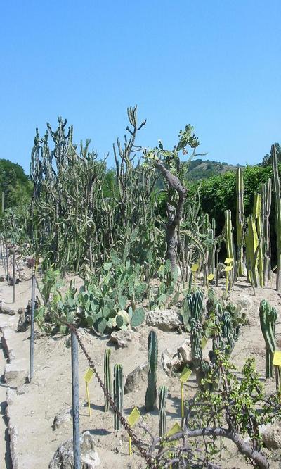 balchik botanicheska gradina 3