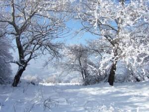 Natural Park Central Balkan