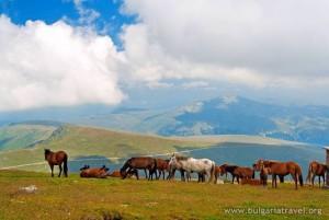 "National Park ""Central Balkan"""