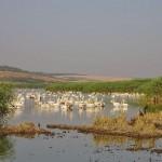 Srebarna Lake